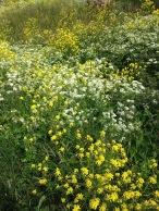 Vallisaaren retkellämme niityn kukat olivat parhaimmillaan